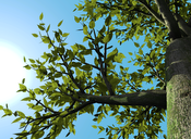 Screenshot: Physically based translucency on a tree